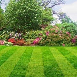 Как устроить газон?