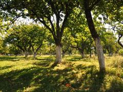 Влада Житомира оприлюднили проект продажу землі в Ботанічному саду