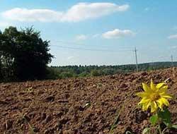 Українським аграріям запропонували підвищити податок: експерти прогнозують банкрутства