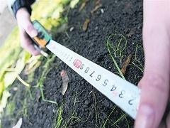 На Житомирщині землі вартістю 7 млн грн незаконно надали в оренду