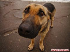 В Житомирі мешканці Польовий жорстоко труять собак. ВІДЕО