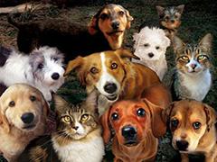 В Житомирі планується відкриття центру захисту тварин