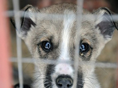 У Житомирі відкриють Центр захисту тварин
