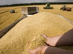 Український рекорд в експорті зернових