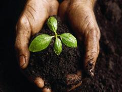 Кому законопроект про ринок землі дозволяє купівлю землі?