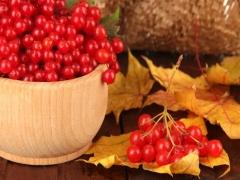 Калина: корисні властивості та рецепти
