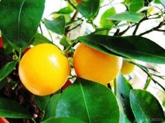 Як виростити екзотичні фрукти з кісточки: інструкція та поради