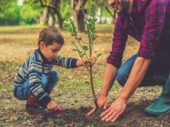 Що можна посадити восени в саду: корисні поради