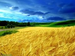 Земля даром: як отримати безкоштовну ділянку в Україні