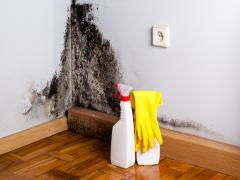 Як безпечно і недорого знищити цвіль в будинку