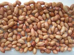 Як виростити арахіс і зібрати урожай в домашніх умовах