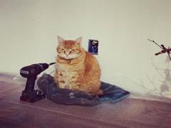 Ремонт квартири коли є тварини